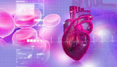 Human heart with blood cell — Stock Photo