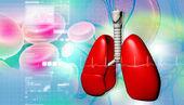 Human lungs — Stockfoto