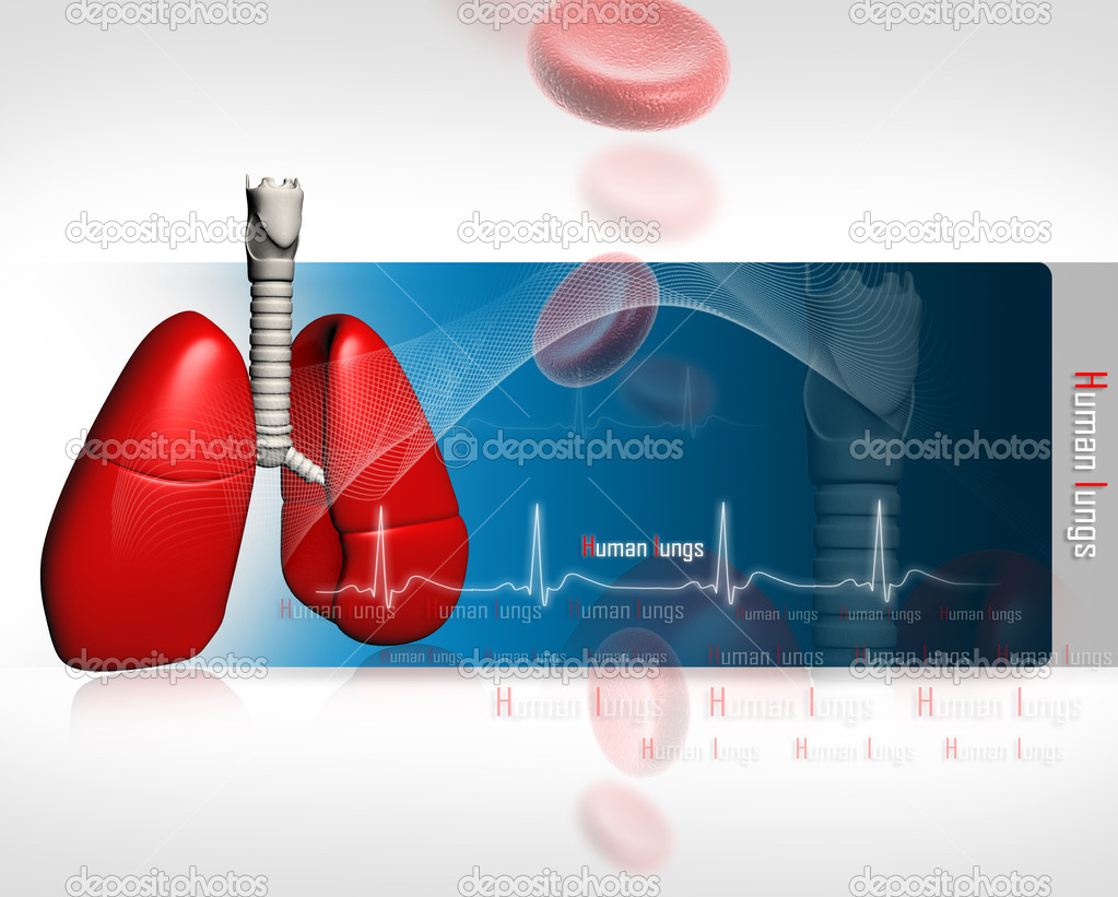 Human lungs with ECG	 — Stock Photo #4537687