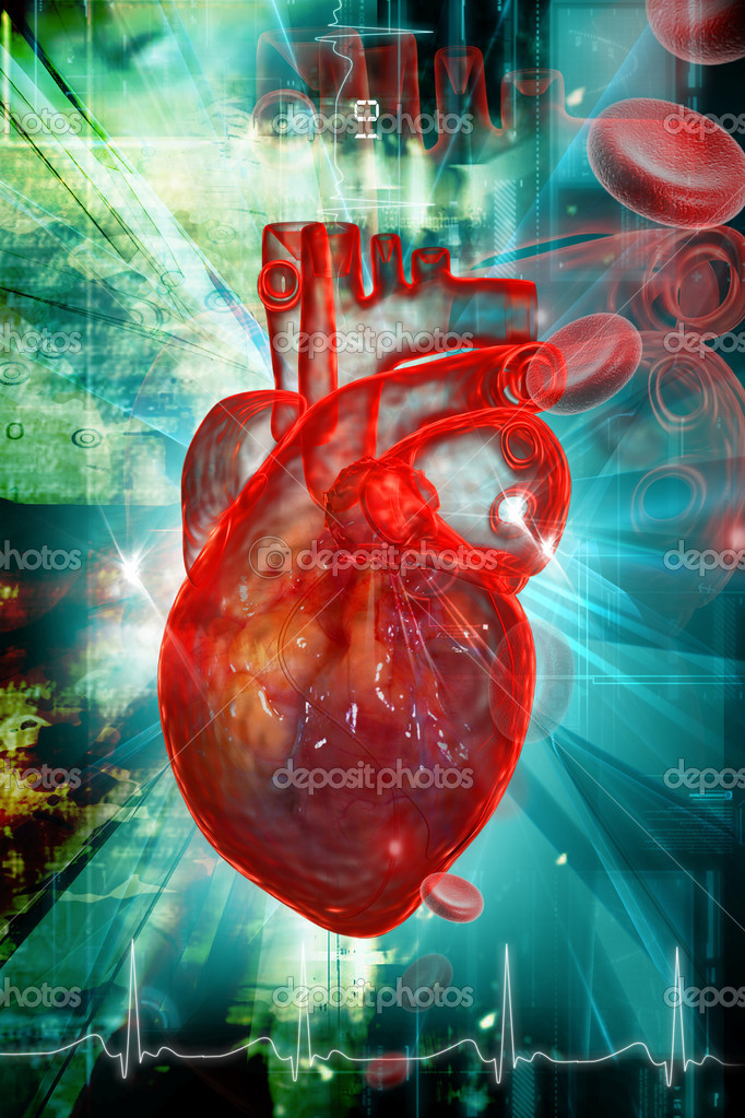 Human heart with ECG	 — Stock Photo #4537735