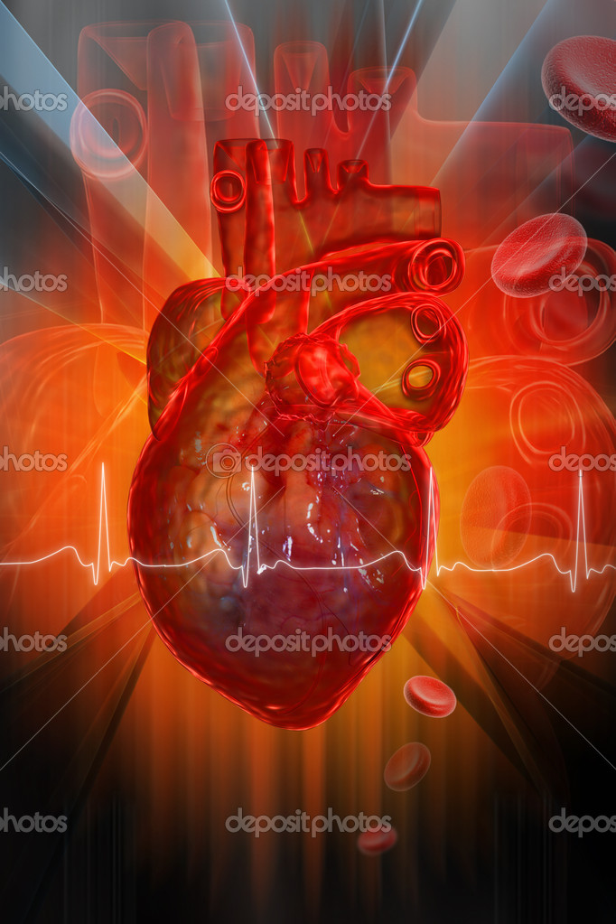 Human heart with ECG	  Stock Photo #4537775