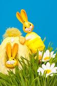 An easter rabbit — Stock Photo