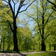 Stock Photo: Avenue in summer park