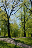 Avenue in summer park — Stock Photo