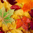 Autumn leaves on ground — Stock Photo #4505382