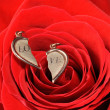 Broken gold heart in a red rose — Stock Photo #4192573
