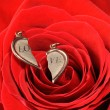 Broken gold heart in a red rose — Stock Photo