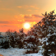 Sunset in winter forest — Stock Photo #4193105