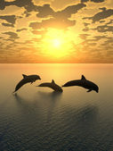 Dolphin yellow sunset_2 — Stock Photo