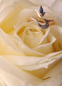 Ring in a white rose — Stock Photo