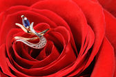 Ring with sapphire in a red rose — Stock Photo