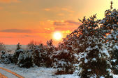 Sunset in winter forest — Foto Stock
