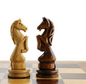Two chess horse — Stock Photo