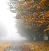 Alleyway in foggy park — Stock Photo