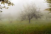 Tree in a fog. — Stock Photo