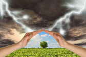 Two hands preserve a green tree against a thunder-storm — Stock Photo