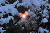 Vintern solnedgång i skogen — Stockfoto