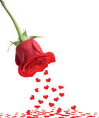Red rose and fall heart — Stock Photo