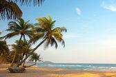 Exotische, eenzaam strand met palmbomen en oceaan — Stockfoto