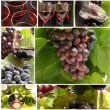 Wine Beautiful Grapes Collage — Stock Photo