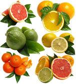 Fruit citrus — Stock Photo