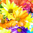 Vibrant Multicolored Daisy Background — Stock Photo
