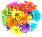 Vibrant Multicolored Daisy Bouquet — Stock Photo