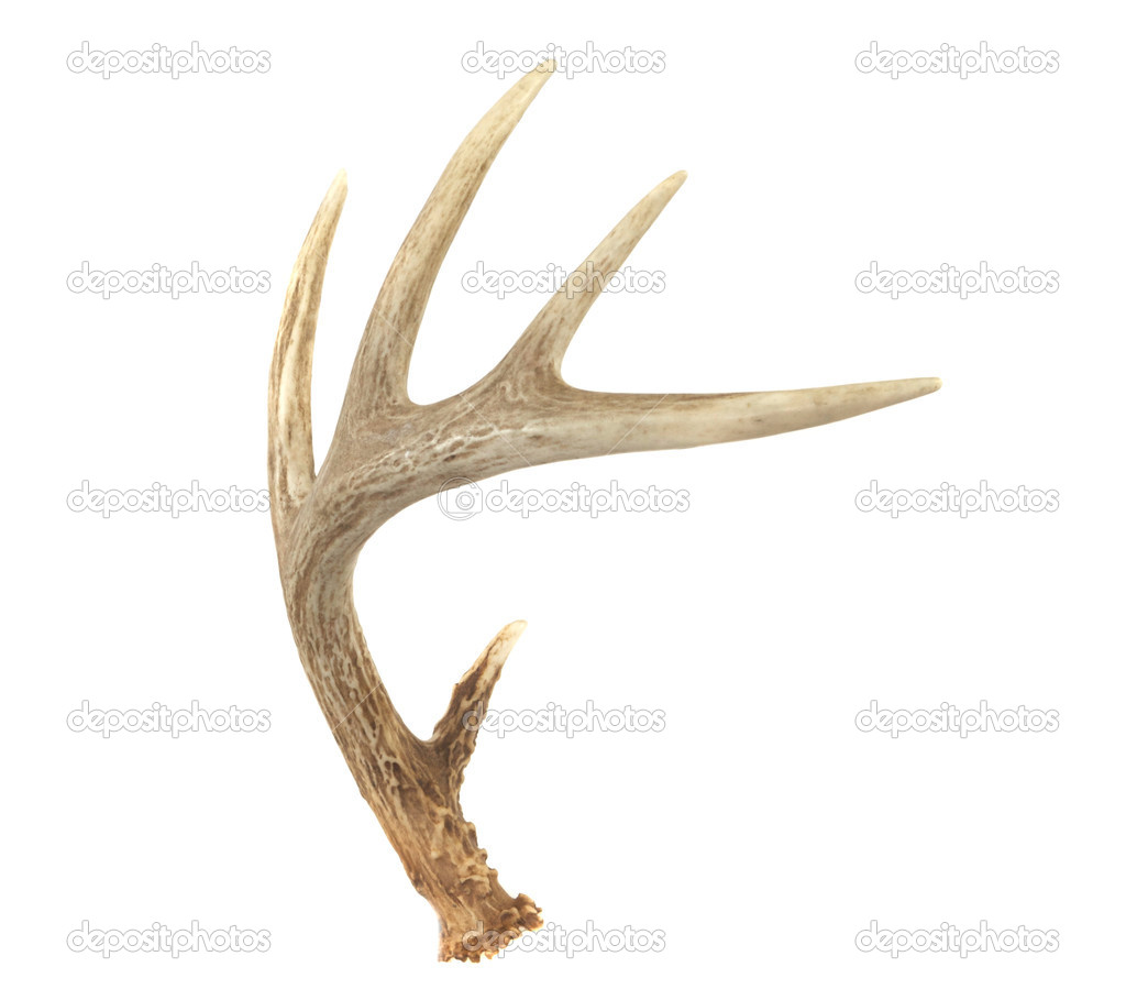 white deer chat I happen to chat with a lot of people around the country about hunting whitetail  deer in their area i came across a very well respected and reccomended place.