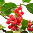 Christmas holly on white background — Stock Photo #4479985