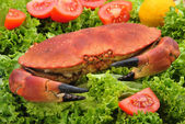 Fresh cooked orkney crab on green salad — Stock fotografie