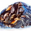 Some fresh organic mussel in blue net — Stock Photo #4899943