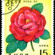Postage stamp. The Flowerses of the red rose. - Stock Photo