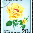 Stock Photo: Postage stamp. Flowerses of yellow rose.