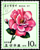 Postage stamp. The Flowerses of the dark red rose. — Stock Photo