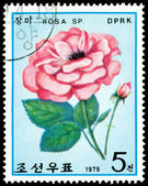 Postage stamp. The Flowerses of the light red rose. — Stock Photo