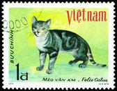 Vintage postage stamp. House cat. 7. — Stock Photo
