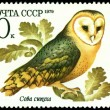 Vintage  postage stamp. Owl barn owl. — Photo