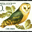 Vintage  postage stamp. Owl barn owl. — Stock Photo