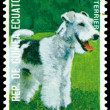 Vintage postage stamp. Fox - Terrier. — Stock Photo