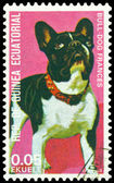 Vintage postage stamp. French Bulldog. — Stock Photo