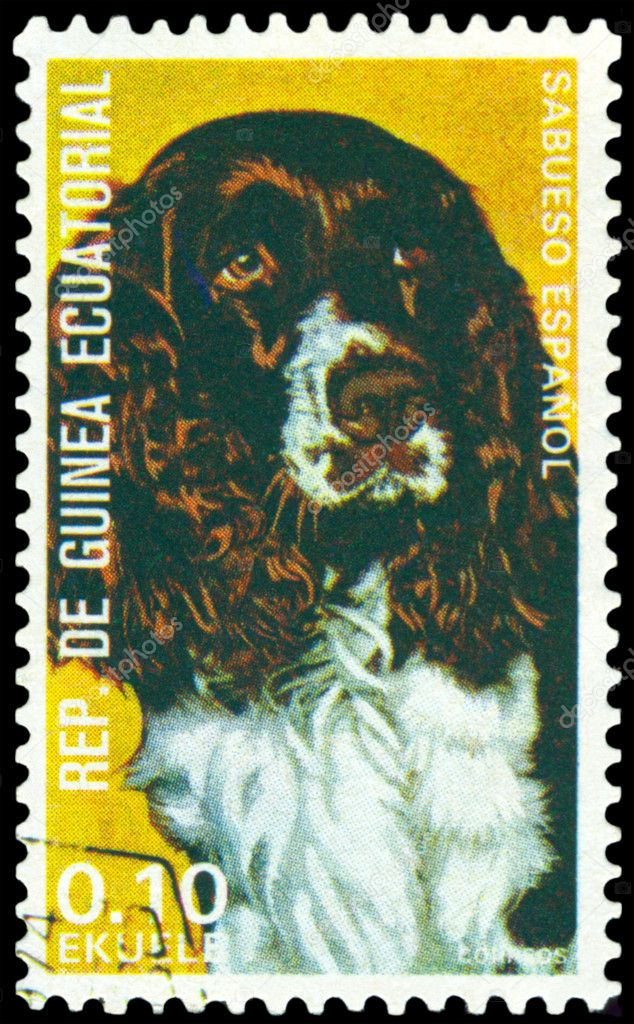 EQUATORIAL GUINEA - CIRCA 1974: A stamp printed by  EQUATORIAL GUINEA shows dog Spanish Hound, series, circa 1974 — Stock Photo #4418584