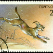 Vintage  postage stamp. Wildcat  Felis Carakal. — Stock Photo