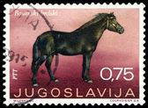 Vintage estampilla. caballo de montaña bosnio. — Foto de Stock