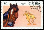 Vintage postzegel. Pursang. — Stockfoto
