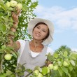 Young woman standing at apple tree - Stock Photo