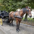 Carriage horse in Brugge, Belgium — Stock Photo