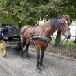 Carriage horse in Brugge, Belgium — Stock Photo #5319683
