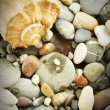 Seashore Still Life — Foto Stock