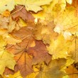 Foto de Stock  : Autumn yellow leaves