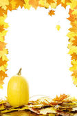 Pumpkins with fall leaves — Stock Photo